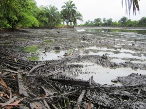 Oil pollution in Goi creek - packed